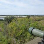 L'Observatoire d'Oiseaux de l'Ile d'Olonne