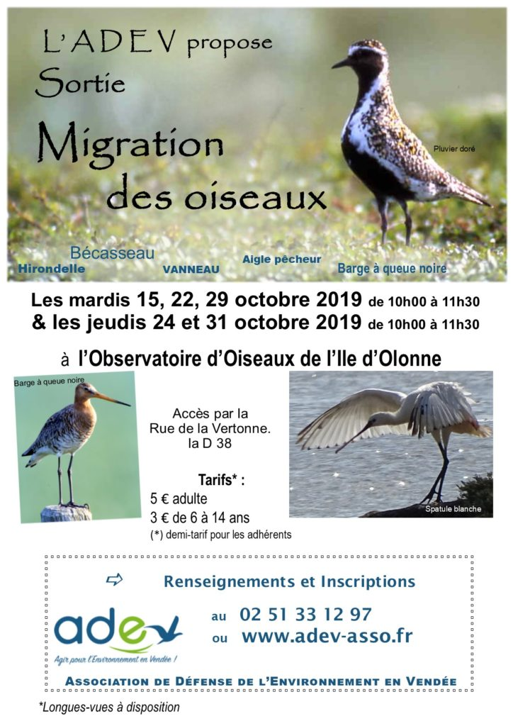 Affich migration 2019 YR 2